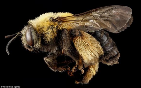 abejas6