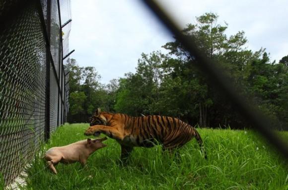 bf59533f-00c1-4255-ac88-4827d640f599_mundo-animal-mejores-fotos-24022013jpg