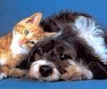 foto-perro-gato-p1