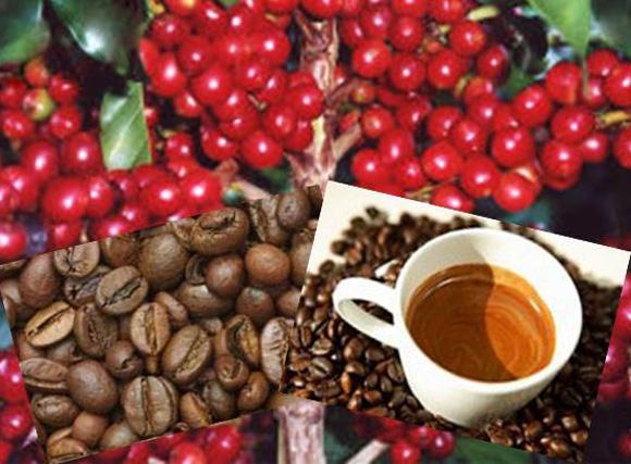 La cafeína puede prevenir el cáncer de próstata