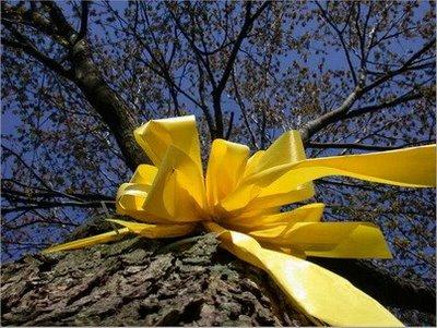 Letra de la canci�n: Ata una cinta amarilla al viejo roble