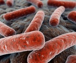 Trasplantan-materia-fecal-para-luchar-contra-bacterias-3