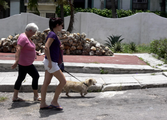 Muchas personas consideran que poseer una mascota en nuestros días se está convirtiendo en un lujo y a la vez en un problema. Jessica Arroyo/Cubadebate.