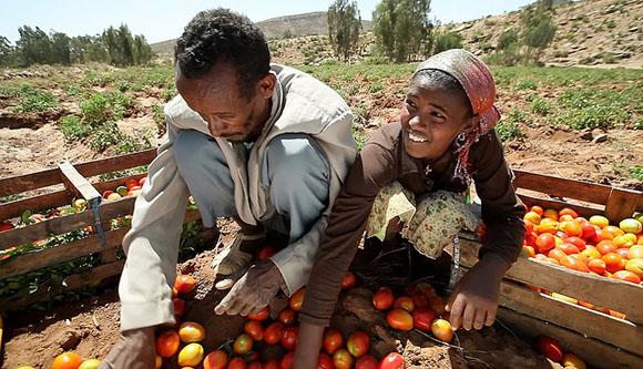 et-farmers-tomatoes-stephan-bachenheimer-736x423