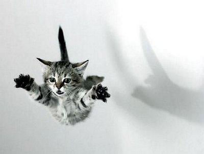 gato vuelo