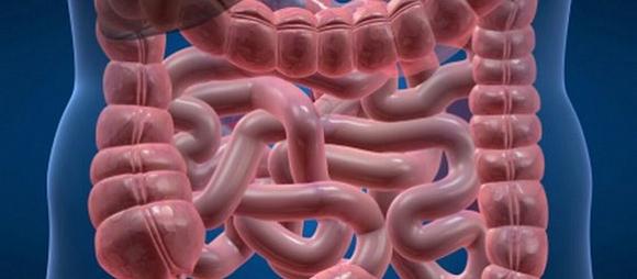 Además de curar enfermedades intestinales, el trasplante fecal puede ayudar a perder peso.