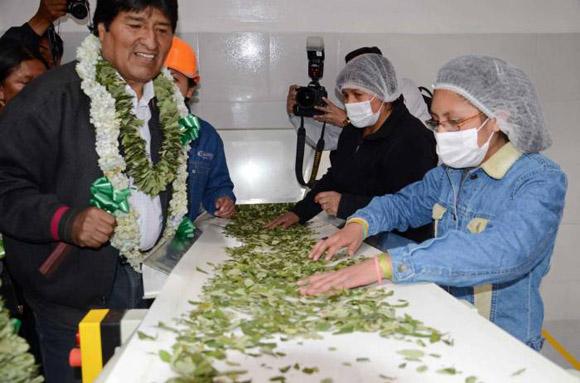 Evo Morales al inaugurar una fábrica de mates (té hecho con hojas de coca) en La Paz, Bolivia.