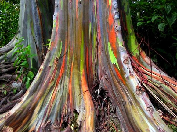 Foto: Blog Ecología, Sostenibilidad y Medio Ambiente.