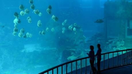 Singapur. El acuario del Resorts World Sentosa de Singapur figura en el 'Libro Guinness de los récords' como el mayor acuario del mundo. Alberga 80.000 animales marinos de 800 especies, contiene 42,9 millones de litros de agua y posee el panel de acrílico más grande del mundo. Foto: AFP Roslan Rahman