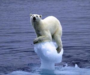 Alarma en el Ártico: Osos polares no se adaptan a la falta de alimento y mueren