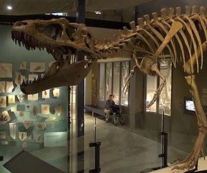 Foto: youtube.com / Natural History Museum of Utah,