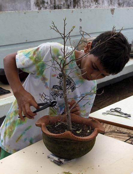 Niño bonsaista Aníbal Terrero durante el taller de modelado de árboles. Foto: Ladyrene Pérez/Cubadebate.