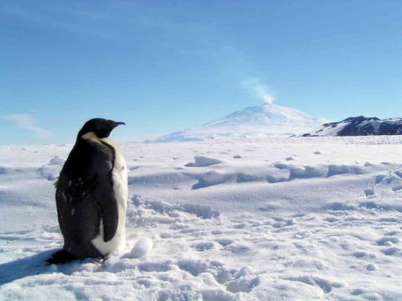 El Monte Erebus, que se pensaba era el único volcán activo de la Antártida. Foto: Archivo.