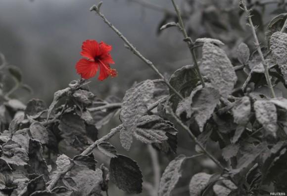 Una flor se abre paso entre la ceniza. Foto: Reuters.