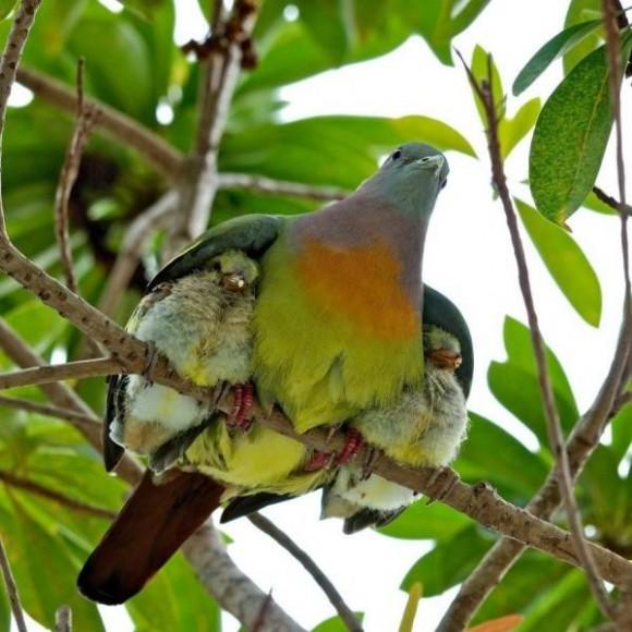 Amor en las alturas. Foto: Beatriz Maria Rodriguez Camejo