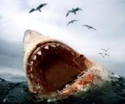 Tiburón Blanco (5)