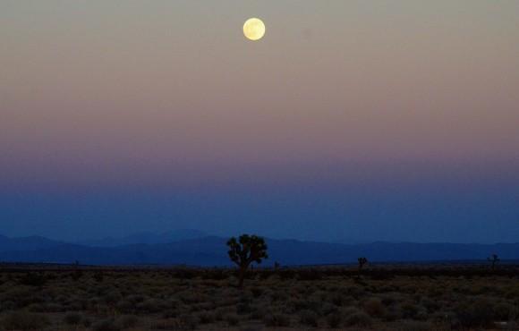 El desierto de Mojave. Foto: Bill Hackwell.