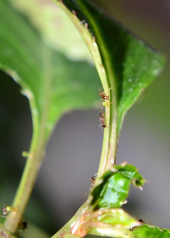 Hormigas en plena faena laboral. Foto: Yasiel González Jiménez, desde Santa Clara.