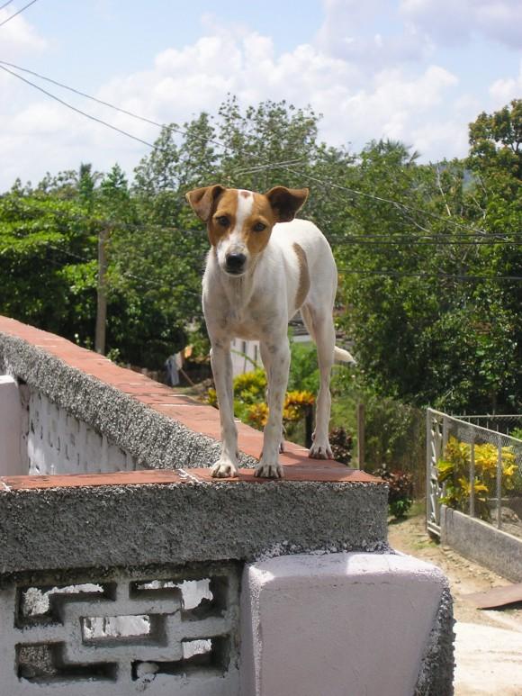 Malabarismo canino. En Fomento, Sancti Spíritus. Foto: Iroel Cabrera Molina