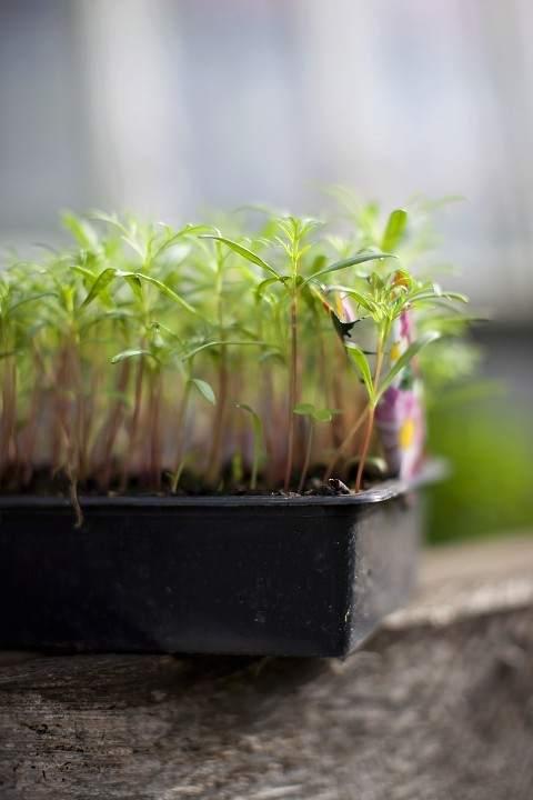 La NASA plantará distintas plantas en la superficie lunar. Foto: 20minutos
