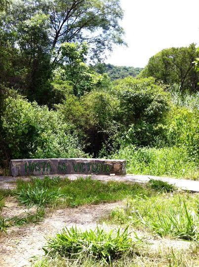 En medio de la semiselva de La quebrada del Churo, el sitio donde el Che tuvo su último combate, hay una pequeña plaza empedrada, en forma de estrella y cobijada por dos árboles de higo. Foto: Kaloian.
