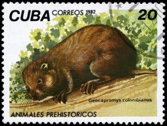 9254316-cuba--vers-1982-un-timbre-imprime-a-cuba-image-montre-une-capromyidae-avec-la-designation--geocaprom
