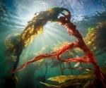 Algas en Petróleo