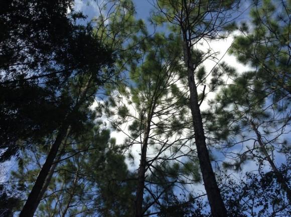 Jardin Botanico Nacional, bello, imponente y a veces olvidado!!! Foto: Hernán