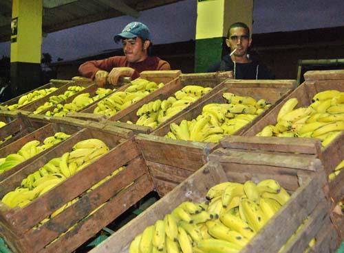 Agricultores y cooperativas que venden sus productos en el Mercado mayorista de alimentos El Trigal, en La Habana, Cuba.