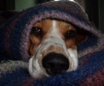 perrito con frio
