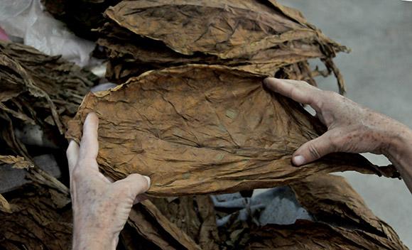 Asciende a 865 mil euros subasta de puros en cierre del XVIII Festival del Habano
