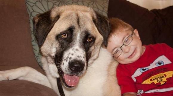Increíble amistad entre un niño discapacitado y un perro de tres patas