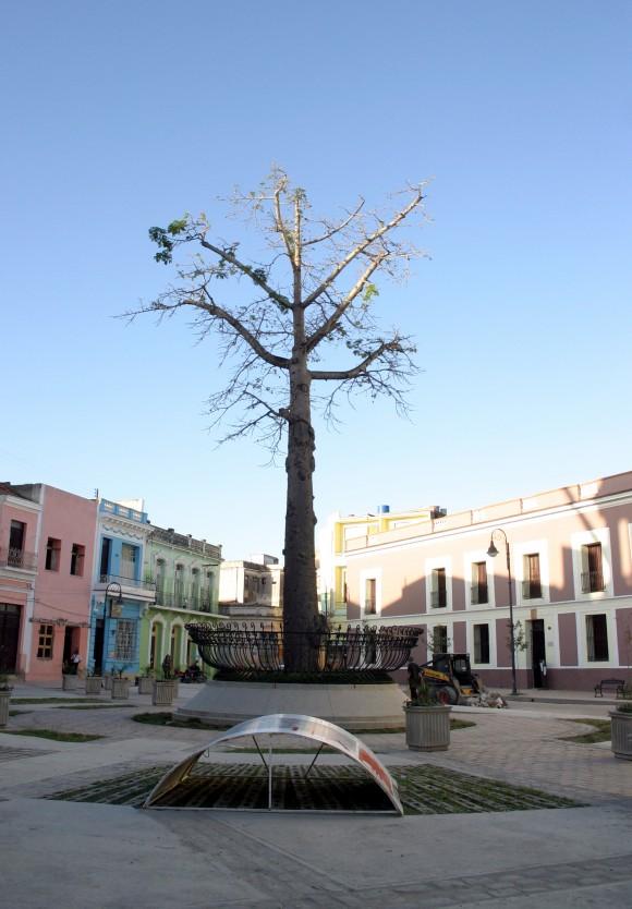 Camagüey, 500 años de Historia. Ceiba de la Libertad en la Plaza de los Trabajadores. Foto: Daylén Vega/Cubadebate