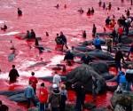 matanza de ballenas 2