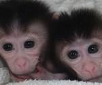 monos-a-la-medida