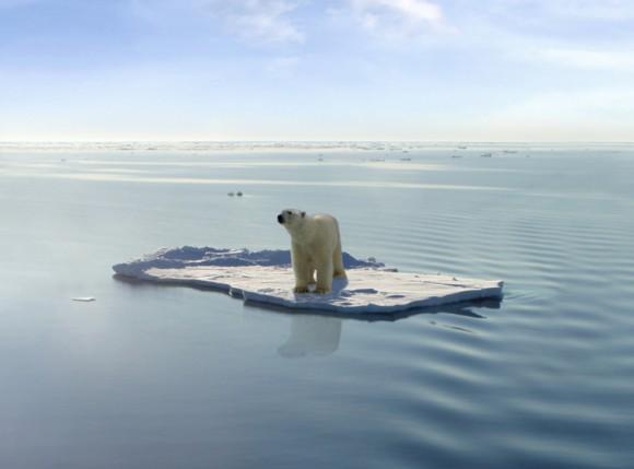 El 2013 fue el 6 to. año más cálido del planeta desde que empezaron los registros en 1850. En la imagen, un oso polar afectado por el calentamiento global. Foto: WND.com