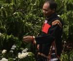 vietnam cafe copia
