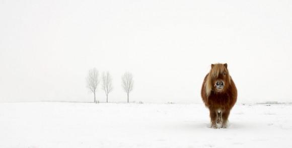 'Pony con frío' del fotógrafo Gert van den Bosch de Holanda, ganador en la categoría Naturaleza y Fauna.