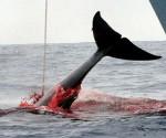 caza ballenas