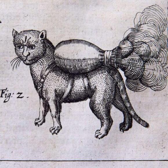 gato cohete