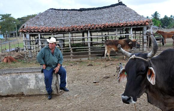 Orlando Obregón Medinilla, presidente por más de trece años y mejor productor lechero de la Cooperativa de Créditos y Servicios Fortalecida (CCSF) Bienvenido Pardillo de Sancti Spíritus. Foto: Ismael Francisco/Cubadebate.