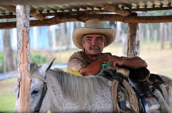 Ganadero  de la Cooperativa de Créditos y Servicios Fortalecida (CCSF) Bienvenido Pardillo de Sancti Spíritus. Foto: Ismael Francisco/Cubadebate.