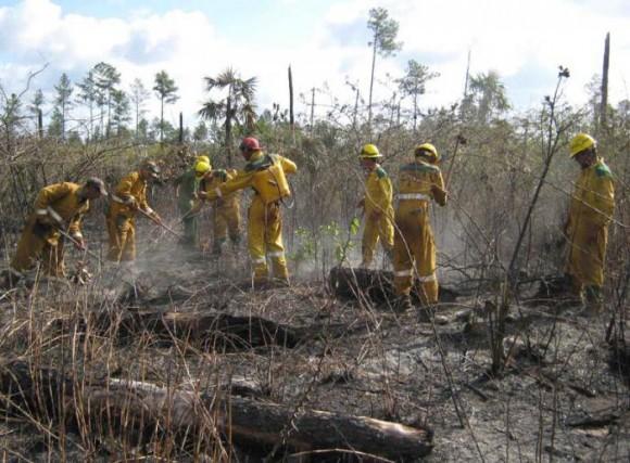 Brigadas especializadas eliminan todo vestigio de fuego en las áreas afectadas.