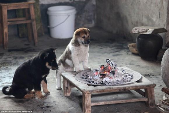 mascotas4marzo2