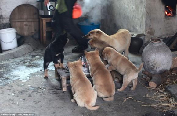 mascotas4marzo4