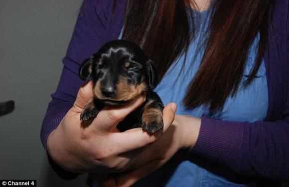 Mini Winnie. Foto: Daily Mail.