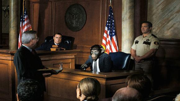 Imagen creada en computadora que acompaña la nota sobre el pleito por abuso a un chimpancé en The New York Times.