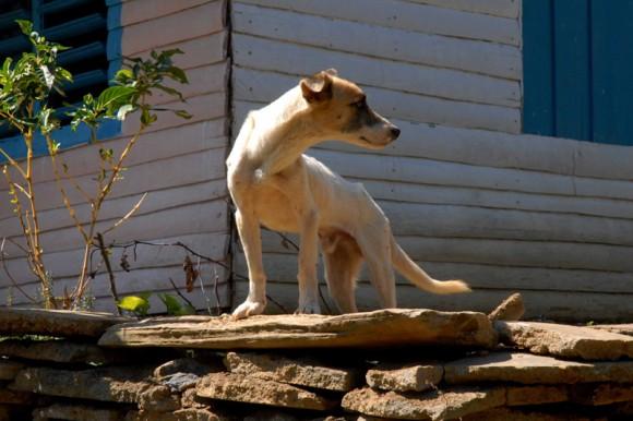 Naturaleza en alturas de Guamuhaya en Cienfuegos