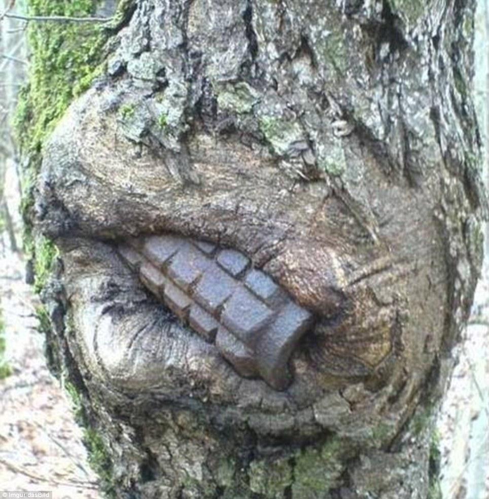 Naturaleza vs Guerra: Armas tragadas por los árboles en ...