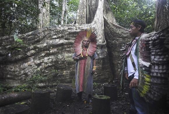 Líderes espirituales de la tribu Huni Kui llevan a cabo una ceremonia un árbol sagrado samauma fuera de la aldea de Novo Segredo.